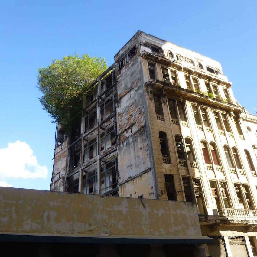 Tree growing on top of a building Image